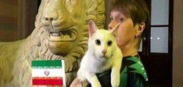 پیش بینی گربه پیشگوی روسی درباره دیدار ایران و اسپانیا +تصاویر