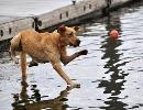 داستان جالب:راه رفتن سگ روی آب