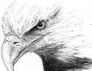 داستان جالب:مرغابی یا عقاب! کدام می خواهید باشید؟