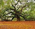 حکایت جالب: آن درخت