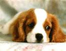 داستان جالب: سگ ها و آدم ها