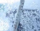 داستان آموزنده:عصر یخبندان