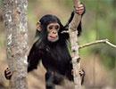 حکایت جالب:تاجر میمون