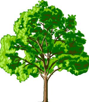 داستان درخت مشکلات , کوتاه وخواندنی و آموزنده