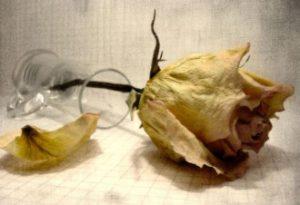 داستان گل خشکیده , داستان عاشقانه و احساسی و خواندنی