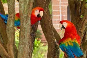 داستان طوطی ها از غصه دق میکنند !خواندنی وجالب