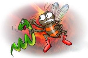 نتیجه تصویری برای مار و زنبور