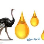معجزه روغن شتر مرغ در درمان بیماری های رودهای