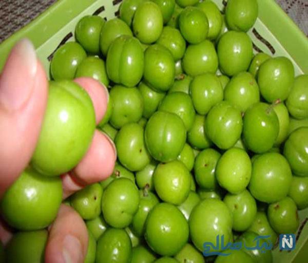 میوه های نوبرانه بهاری