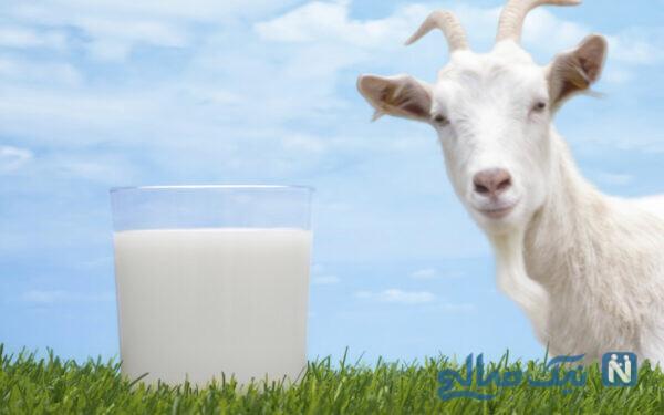 شیر و کم خونی