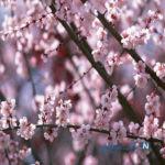 در بهار از این غذاها نخورید!
