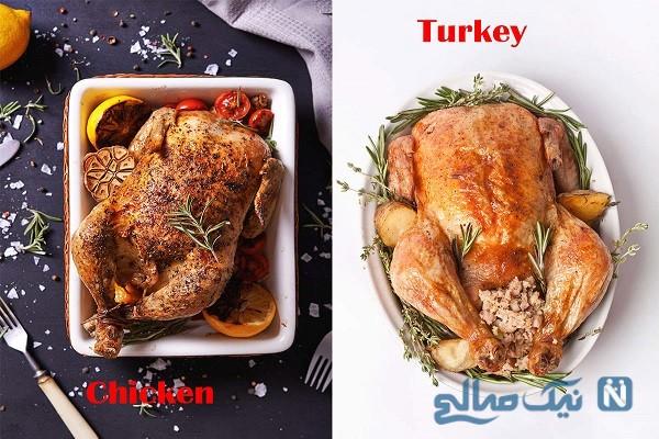 گوشت مرغ بهتر است یا بوقلمون؟