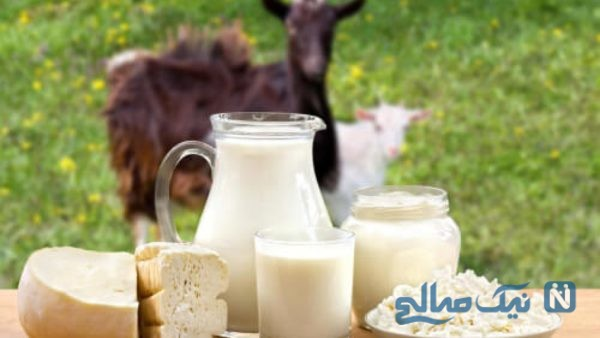 فواید شیربز