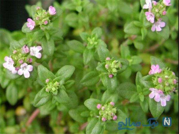 دمنوشهای گیاهی بر علیه حساسیت بهاری