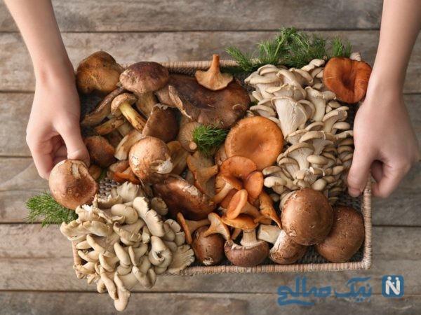 خواص قارچ خوراکی