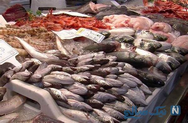 خواص و مزاج ماهی در طب سنتی