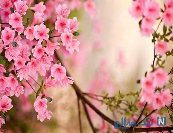 پرخوری در بهار