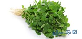 با خاصیت های جالب سبزی شنبلیله آشنا شوید!