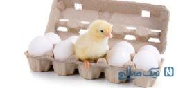 فایده های بی نظیر تخم مرغ را بدانید!