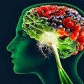 مواد غذایی که به رشد مغز فرزندتان کمک میکنند!