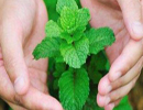 با خواص نعناع یکی از بهترین سبزی ها آشنا شوید!