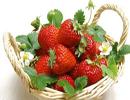 توت فرنگی نوعی میوه ممنوعه برای بارداری!