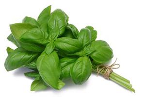 گیاه ریحان از درمان طبیعی سرماخوردگی و گلودرد تا درمان خارش سر!