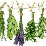 با فایده های این سبزیجات معطر آشنا شوید!