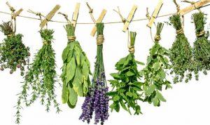 فایده سبزیجات معطر