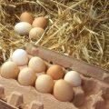 تخم مرغ های قهوه ای چه تفاوتی با تخم مرغ های سفید دارند؟!