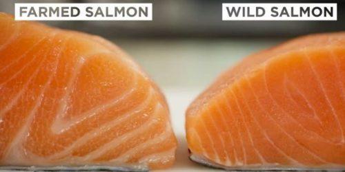 امگا ۳ موجود در انواع ماهی های پرورشی و سالمون!