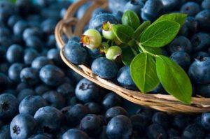 زغال اخته آبی میوه ای موثر برای کاهش وزن!