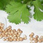 خواص درمانی گیاه گشنیز برای رفع بیماری های گوارشی!