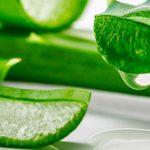 خواص گیاه گیاه آلوئه ورا برای سلامتی بدن چیست؟!
