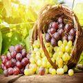 فایده های انگور از کاهش وزن تا پیشگیری از پوکی استخوان!