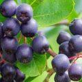 با خواص میوه و سبزیجات بنفش آشنا شوید!