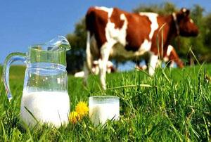 شیر ارگانیک برای سلامتی بهتر است شیر کارخانه ای ؟!