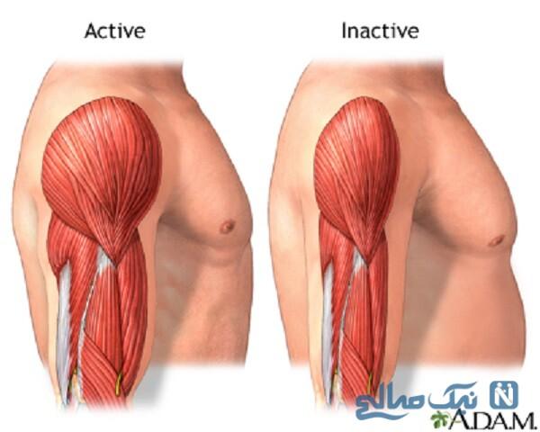 عضلانی شدن بدن
