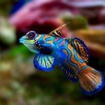 چند نوع از زیباترین حیوانات موجود در طبیعت!(1)