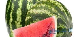 تولید هندوانه های عجیب و فانتزی به اندازه یک زیتون