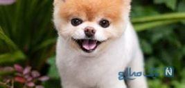 معروف ترین و بامزه ترین سگ جهان درگذشت!