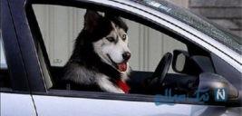 برخورد ماموران انتظامی با سگ گردانی در خودرو