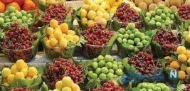 قیمت های نجومی میوه های نوبرانه تابستان+عکس
