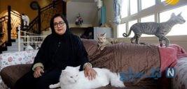 تصاویری جالب از نگهداری گربه های ولگرد در خانه