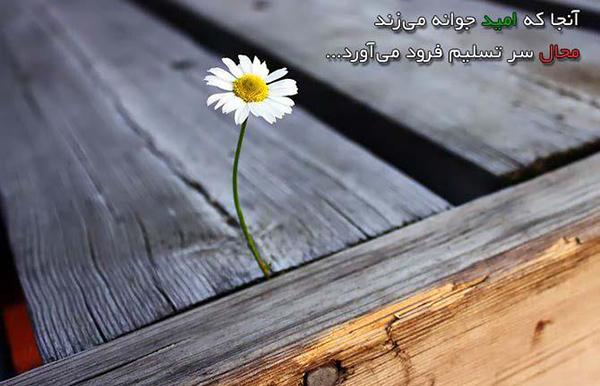 جمله های زیبا درباره امید
