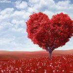 سخنان بزرگان در مورد عشق