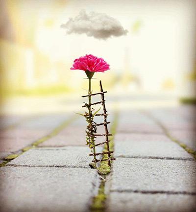 نکات زیبا برای زندگی زیبا