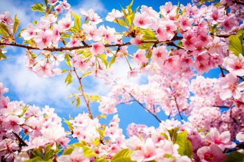 اس ام اس بهار