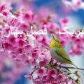 عکس نوشته و پیامک های جدید برای تبریک فصل زیبای بهار