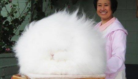 عجیبترین خرگوش جهان +عکس